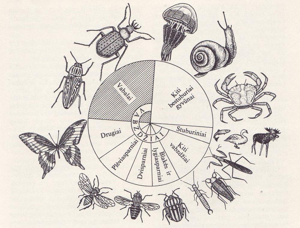 Vabzdžių ir kitų gyvūnų santykinis pasiskirstymas