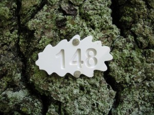Pastebėję štai tokiu ženklu žymėtą ąžuolą, žinokite: jis svarbus visoje Europoje retam vabalui – niūriaspalviui auksavabaliui.